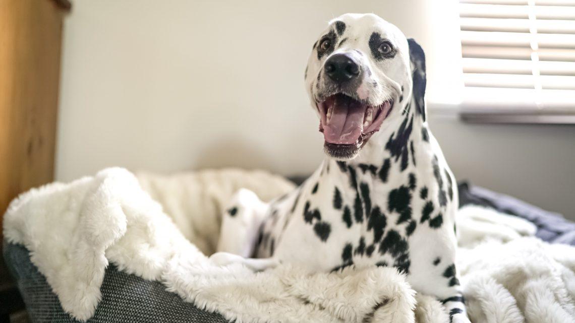 38 Gründe, warum es so viel Spaß macht, einen Hund zu haben
