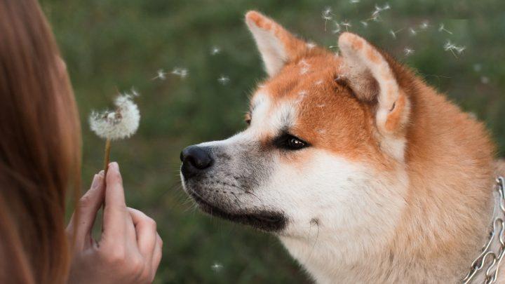 Alles, was Sie über den Hundefriseur wissen müssen